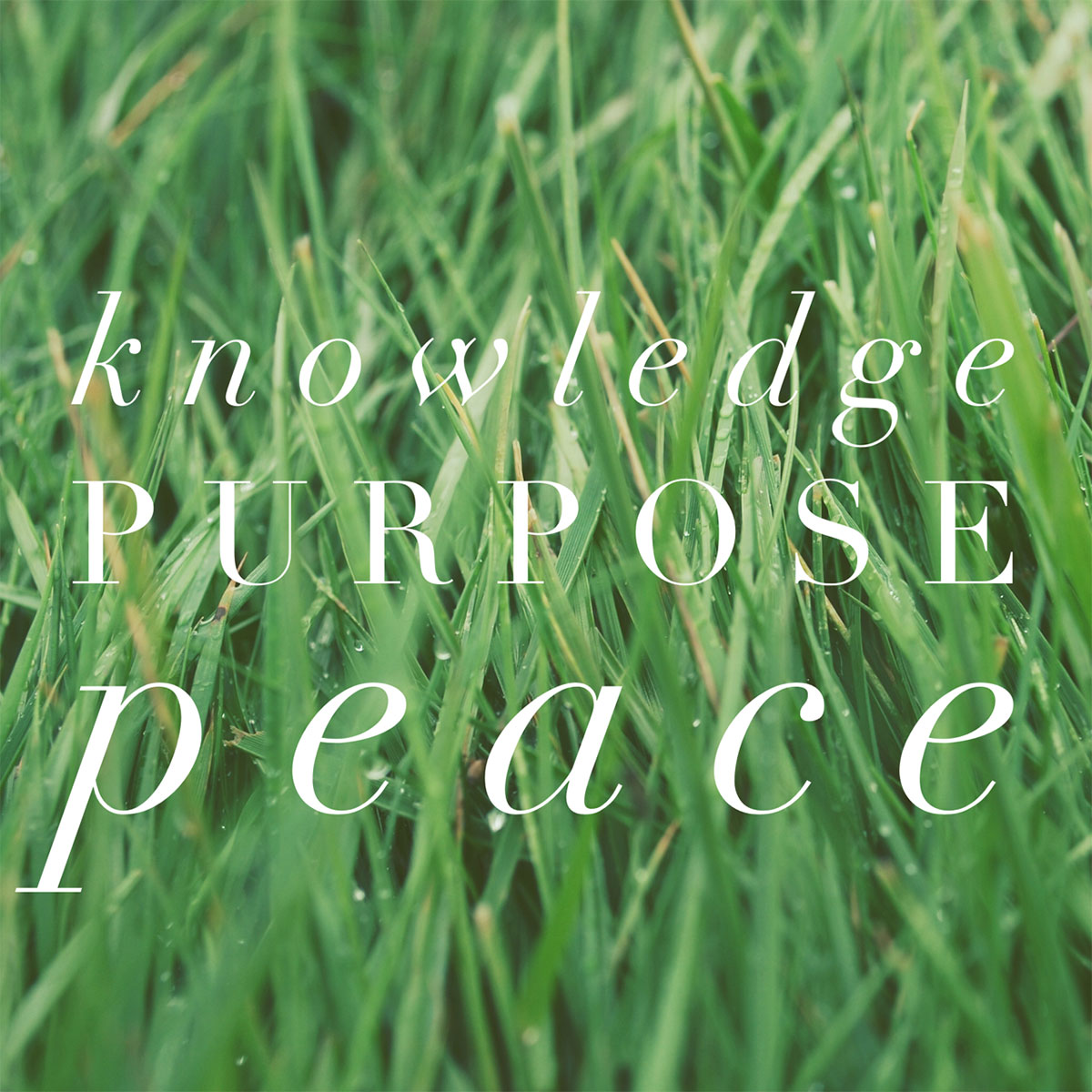 Knowledge, Purpose, Peace